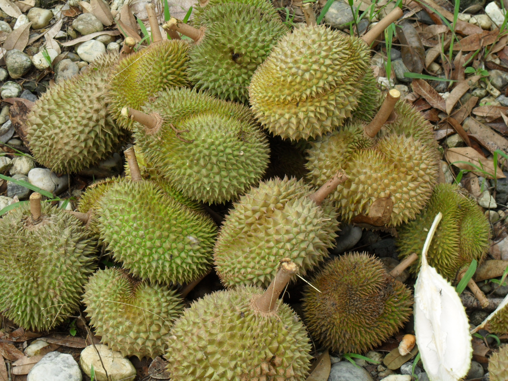 durian orchards signposts. Black Bedroom Furniture Sets. Home Design Ideas