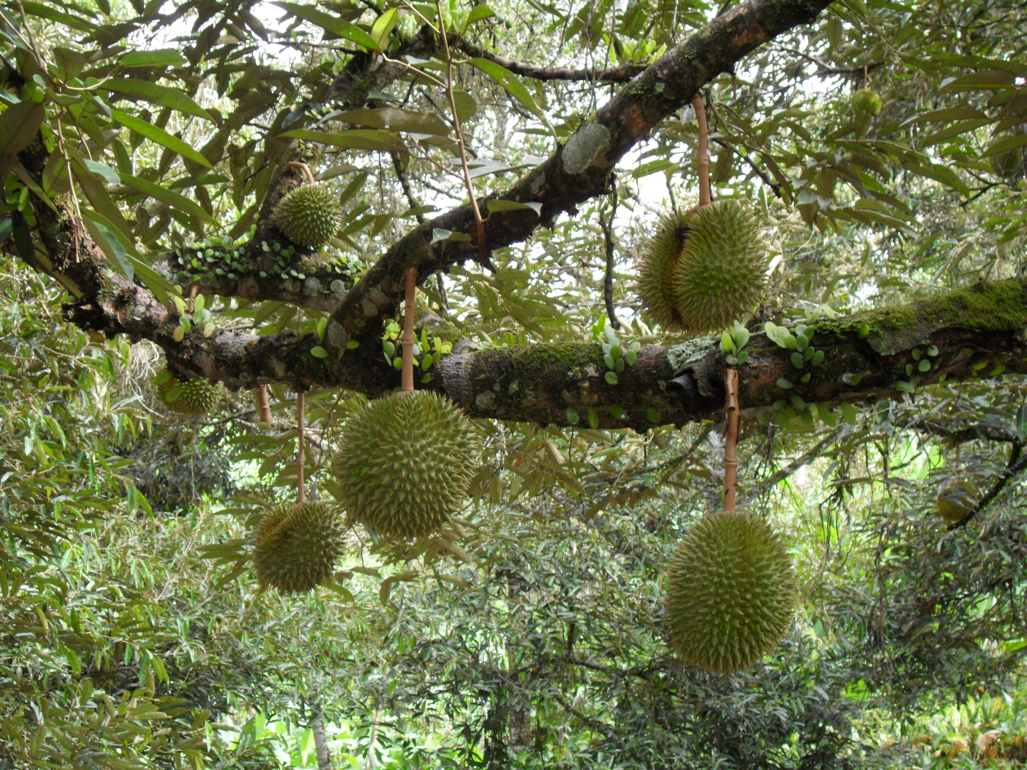 Durians Signposts